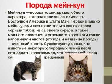 Порода мейн-кун Мейн-кун —порода кошек дружелюбного характера, которая произо...