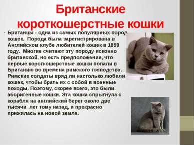 Британские короткошерстные кошки Британцы - одна из самых популярных пород ко...