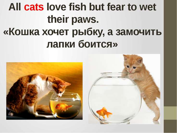 All cats love fish but fear to wet their paws.       «Кошка хочет рыбку, а за...