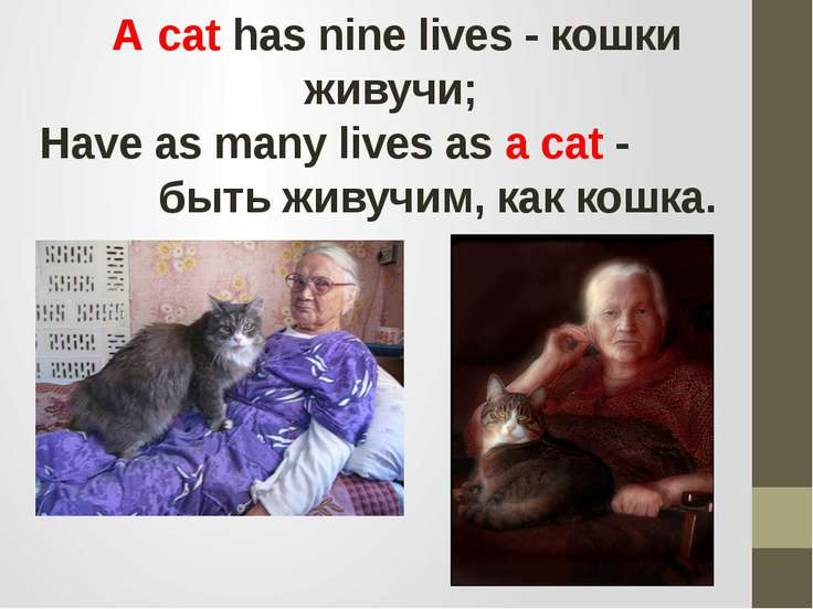 A cat has nine lives - кошки живучи; Have as many lives as a cat - быть живуч...