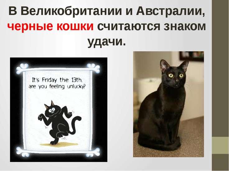 В Великобритании и Австралии, черные кошки считаются знаком удачи.