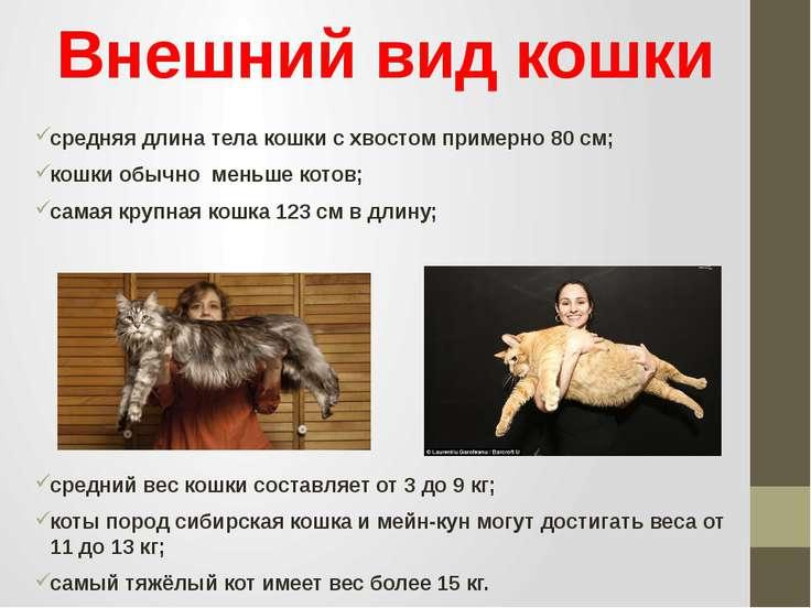 Внешний вид кошки средняя длина тела кошки с хвостом примерно 80 см; кошки об...
