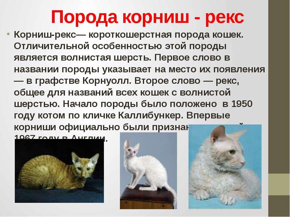 Порода корниш - рекс Корниш-рекс— короткошерстная порода кошек. Отличительной...