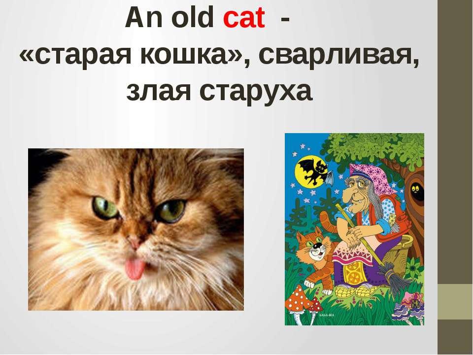 Аn old cat - «старая кошка», сварливая, злая старуха