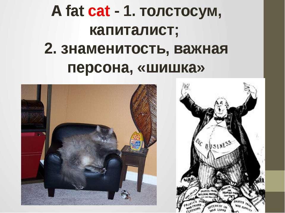 A fat cat - 1. толстосум, капиталист; 2. знаменитость, важная персона, «шишка»