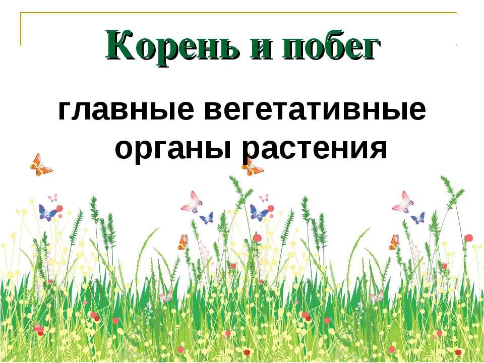 Корень и побег главные вегетативные органы растения