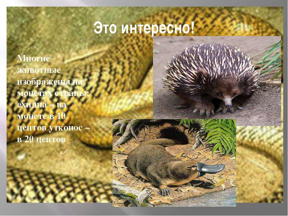 Это интересно! Многие животные изображены на монетах страны: ехидна – на моне...