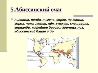 5.Абиссинский очаг пшеница, полба, ячмень, сорго, чечевица, горох, чина, люпи...