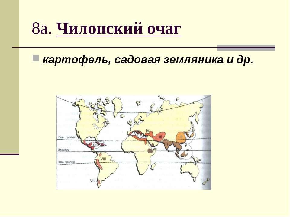 8а. Чилонский очаг картофель, садовая земляника и др.