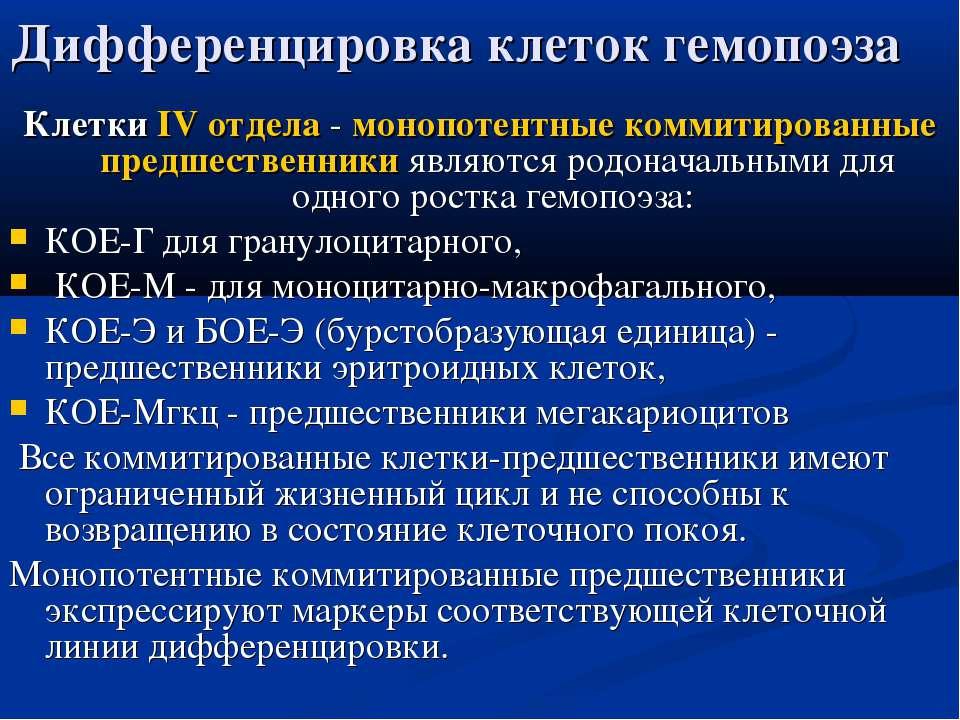 Дифференцировка клеток гемопоэза Клетки IV отдела - монопотентные коммитирова...