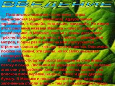Правильное название столетника – агава американская (Agave americana). Agayos...