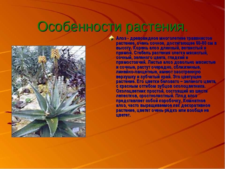 Особенности растения. Алоэ - древовидное многолетнее травянистое растение, оч...