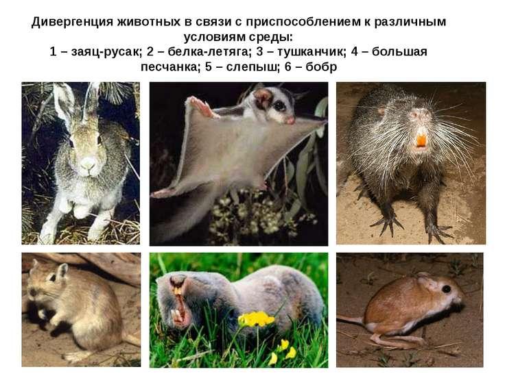 Дивергенция животных в связи с приспособлением к различным условиям среды: 1 ...