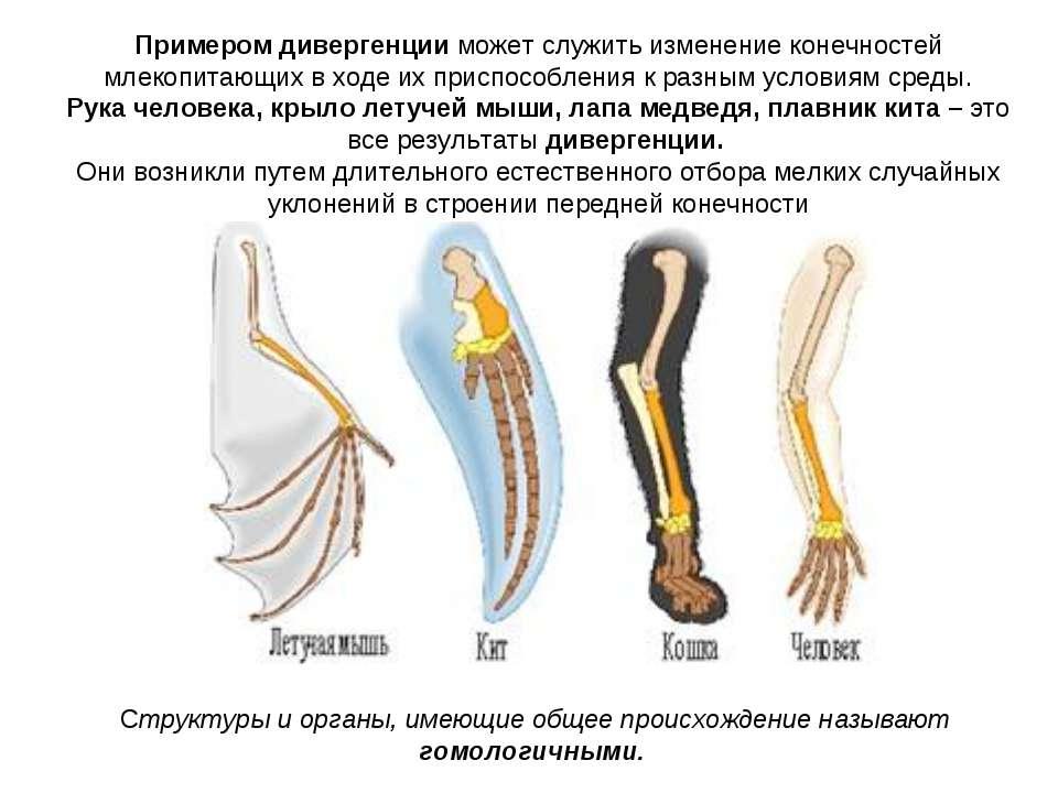 Структуры и органы, имеющие общее происхождение называют гомологичными. Приме...