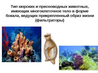 Тип морских и пресноводных животных, имеющих многоклеточное тело в форме бока...