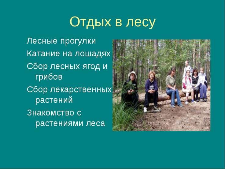 Отдых в лесу Лесные прогулки Катание на лошадях Сбор лесных ягод и грибов Сбо...