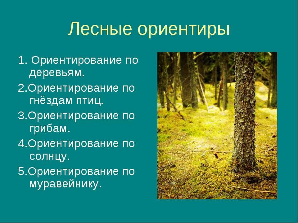 Лесные ориентиры 1. Ориентирование по деревьям. 2.Ориентирование по гнёздам п...
