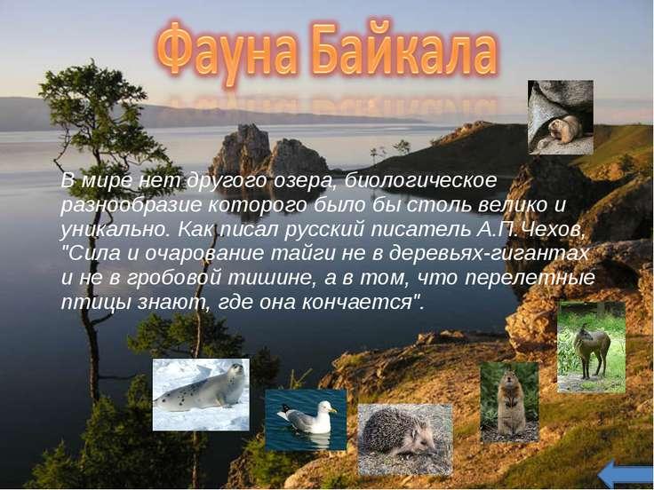 В мире нет другого озера, биологическое разнообразие которого было бы столь в...