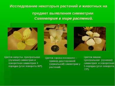 Исследование некоторых растений и животных на предмет выявления симметрии Сим...