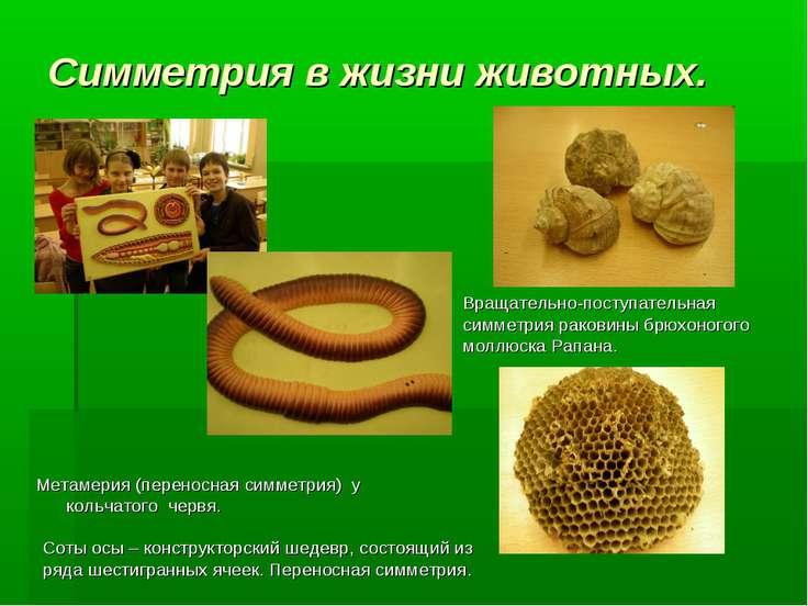 Симметрия в жизни животных. Метамерия (переносная симметрия) у кольчатого чер...