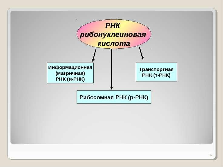 * РНК рибонуклеиновая кислота Информационная (матричная) РНК (и-РНК) Транспор...