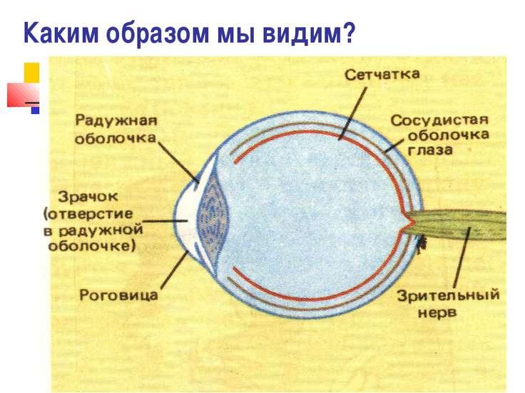Каким образом мы видим?