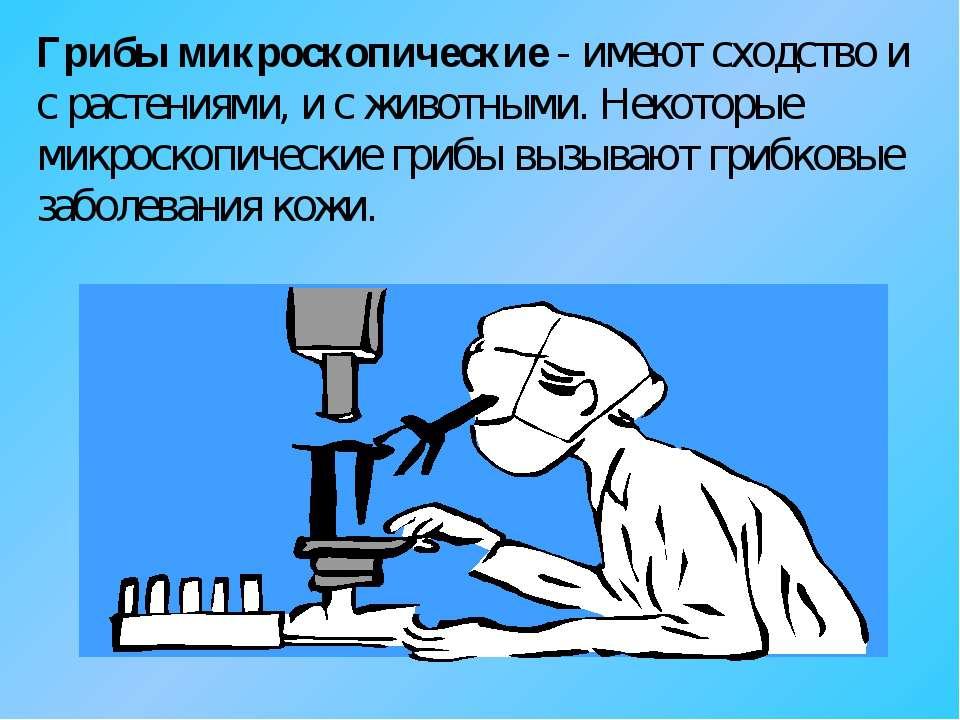 Грибы микроскопические - имеют сходство и с растениями, и с животными. Некото...