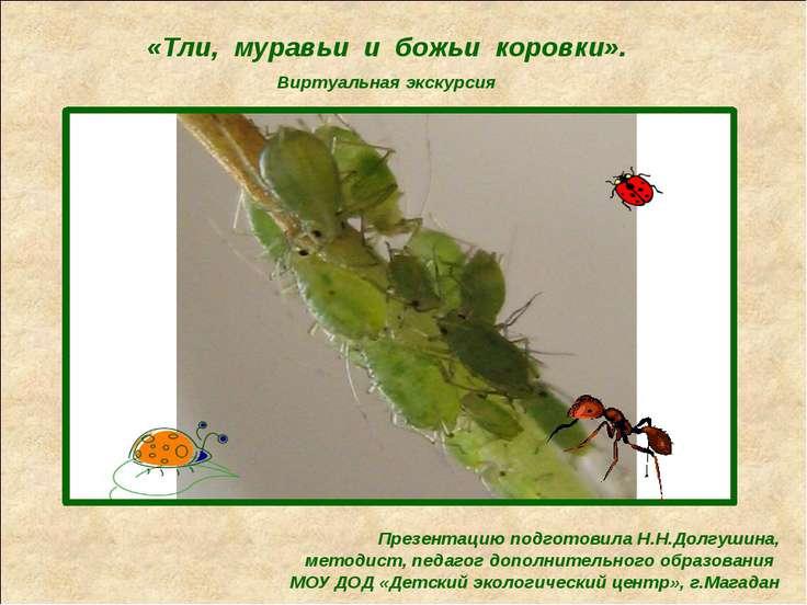 «Тли, муравьи и божьи коровки». Виртуальная экскурсия Презентацию подготовила...