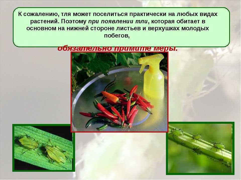 К сожалению, тля может поселиться практически на любых видах растений. Поэтом...