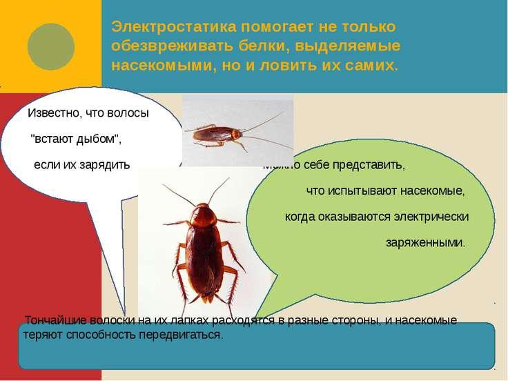 Электростатика помогает не только обезвреживать белки, выделяемые насекомыми,...