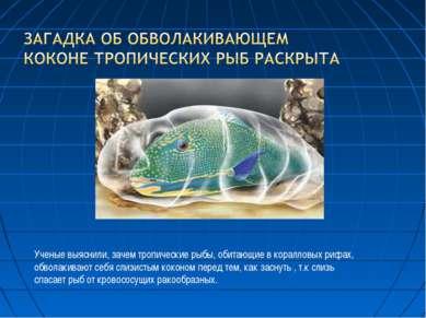 Ученые выяснили, зачем тропические рыбы, обитающие в коралловых рифах, обвола...