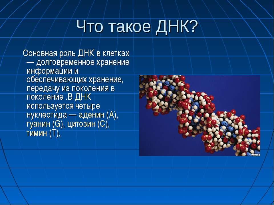 Что такое ДНК? Основная роль ДНК в клетках — долговременное хранение информац...