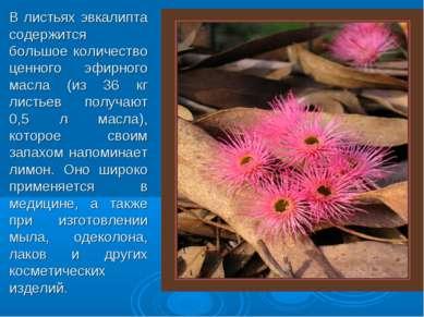 В листьях эвкалипта содержится большое количество ценного эфирного масла (из ...