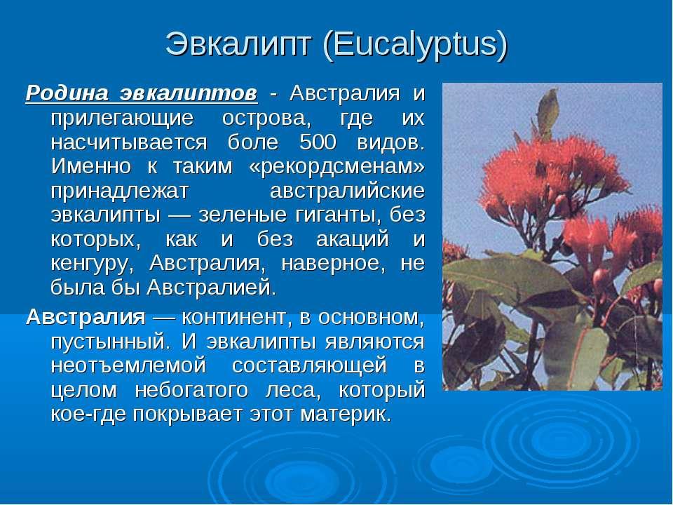 Эвкалипт (Eucalyptus) Родина эвкалиптов - Австралия и прилегающие острова, гд...