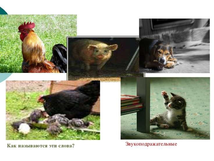Запишите буквами звуки, которые издают изображённые на фотографиях животные. ...