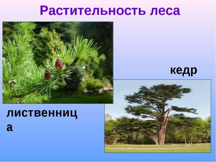 Растительность леса