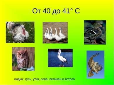 От 40 до 41° С индюк, гусь, утка, сова, пеликан и ястреб