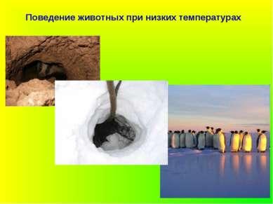 Поведение животных при низких температурах