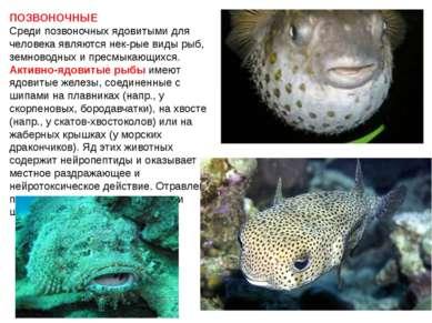 ПОЗВОНОЧНЫЕ Среди позвоночных ядовитыми для человека являются нек-рые виды ры...