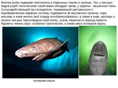Многие рыбы содержат зоотоксины в отдельных тканях и органах. Так, у нек-рых ...