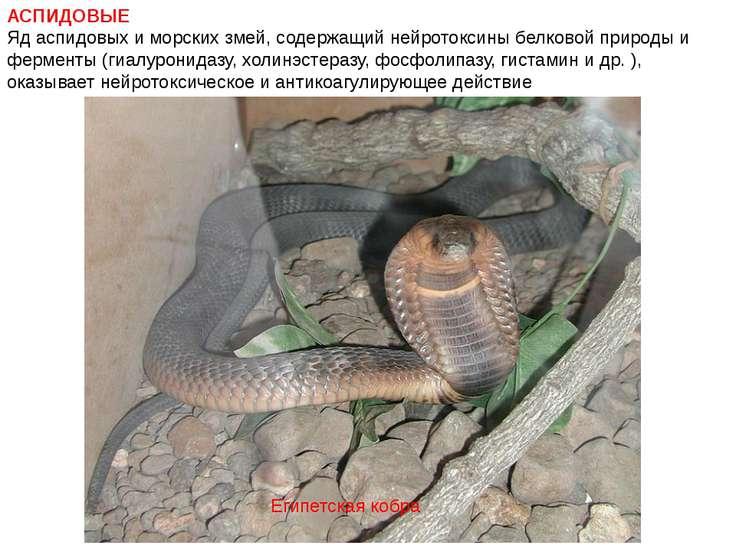 АСПИДОВЫЕ Яд аспидовых и морских змей, содержащий нейротоксины белковой приро...