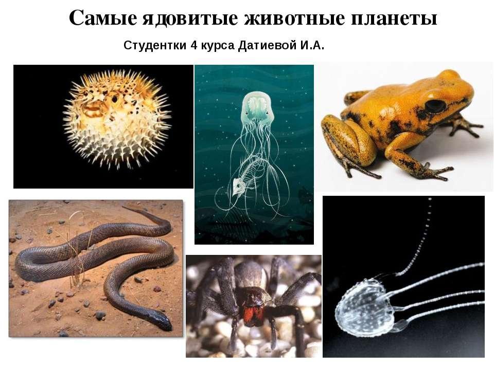 Самые ядовитые животные планеты Студентки 4 курса Датиевой И.А.