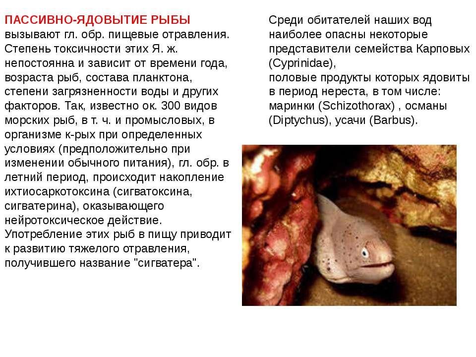 ПАССИВНО-ЯДОВЫТИЕ РЫБЫ вызывают гл. обр. пищевые отравления. Степень токсично...