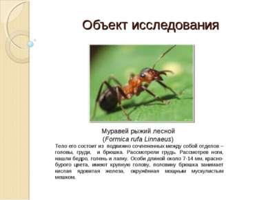 Муравей рыжий лесной (Formica rufa Linnaeus) Тело его состоит из подвижно соч...