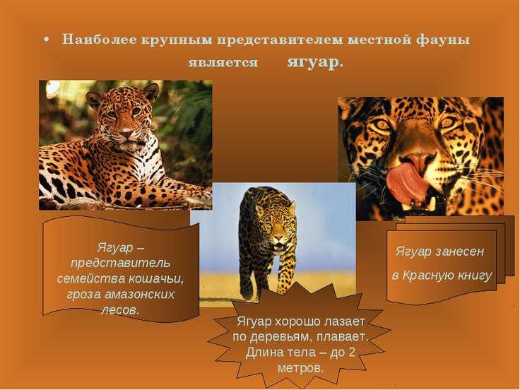 Наиболее крупным представителем местной фауны является ягуар.