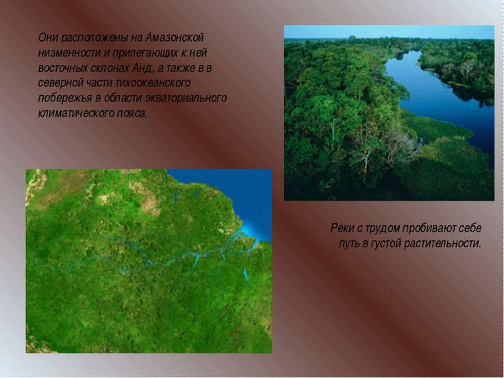 Они расположены на Амазонской низменности и прилегающих к ней восточных склон...