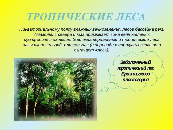 ТРОПИЧЕСКИЕ ЛЕСА К экваториальному поясу влажных вечнозеленых лесов бассейна ...