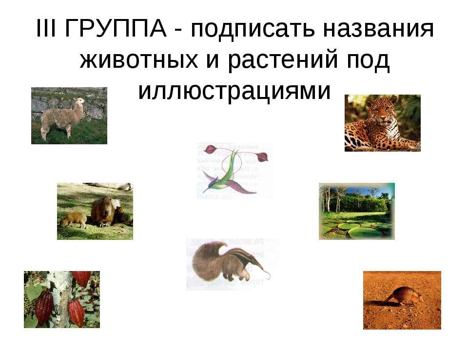 III ГРУППА - подписать названия животных и растений под иллюстрациями