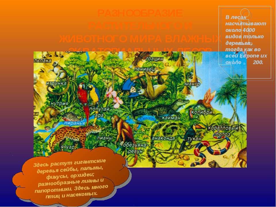 РАЗНООБРАЗИЕ РАСТИТЕЛЬНОГО И ЖИВОТНОГО МИРА ВЛАЖНЫХ ЭКВАТОРИАЛЬНЫХ ЛЕСОВ