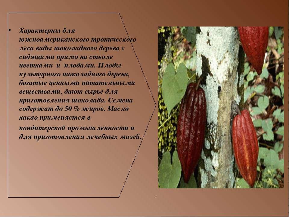 Характерны для южноамериканского тропического леса виды шоколадного дерева с ...
